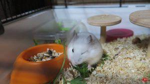 Sfaturi pentru păstrarea hamsterilor