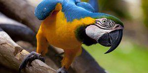 Speranța de viață a unui papagal