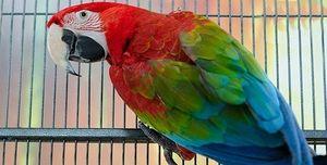 Cât de mulți papagali vii