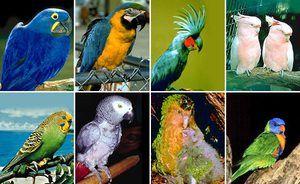 Îngrijire pentru papagalii mici