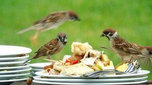 Descrierea unei vrabii de păsări