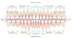 Descrierea dinților umane