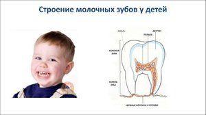 Lactate și dinți permanenți
