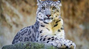 Natura leopardului de zăpadă
