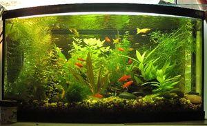 Conținutul de peceți într-un acvariu comun