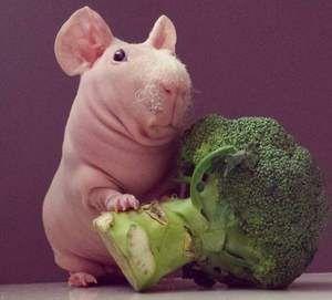 Broccoli și slabi