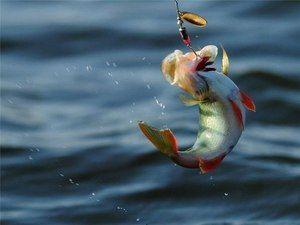 Prindeți pește