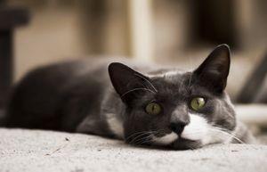 Oprește-stres pentru pisici-comentarii