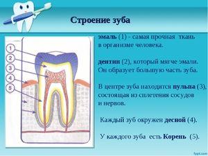 Cum se află dinții?