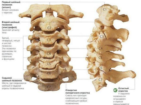 Funcțiile și structura coloanei vertebrale cervicale