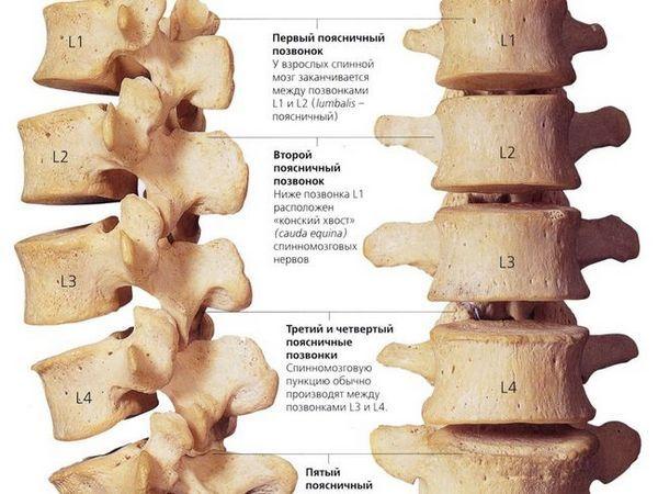 Structura coloanei lombare a unei persoane