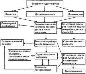 Cauzele infectării cu adenovirus - o diagramă vizuală