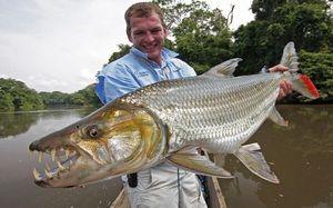 Goliat de pește Tiger: descriere și caracteristici