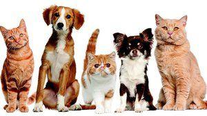 Medicamentul pentru tratamentul animalelor