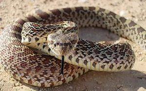 Să visezi la un atac de șarpe