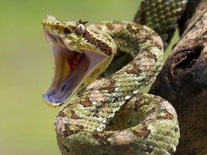 Cum să explici visul despre uciderea unui șarpe
