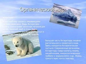 Lumea animală unică din Antarctica