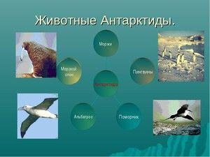 Lumea animală a Antarcticii