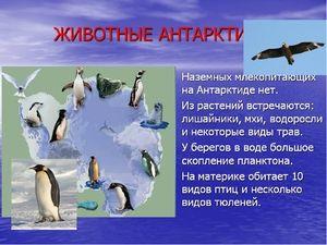 Animale unice din Antarctica