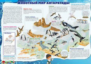 Ce animale din Antarctica