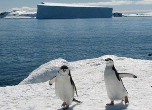 Pinguinii din Antarctica