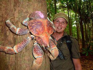 Arthropod gigantic