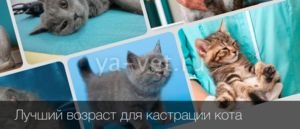 Castrarea unei pisici