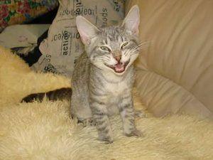 Kitten acasă