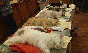 Într-o clinică veterinară