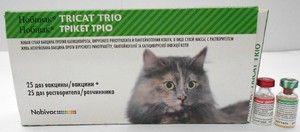 Vaccinul Nobivac pentru pisici - instrucțiuni de utilizare