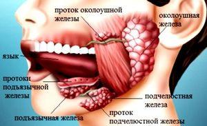Glandele salivare umane