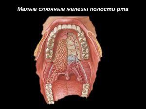 Glandele salivare mici și funcția lor
