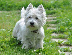 Îngrijirea câinilor