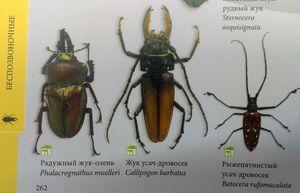 Tipuri de insecte și numele lor
