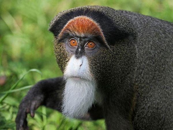 Tipuri neobișnuite de maimuțe