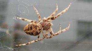Structura exterioară a păianjenului. Abilități speciale de supraviețuire