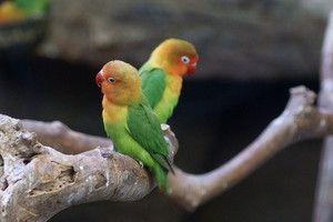 Ce afectează speranța de viață a unui papagal
