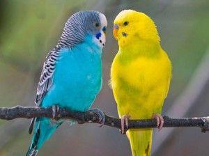 Descriere de papagal pe lingă