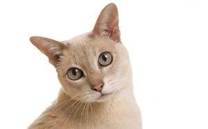Compararea vârstei unei pisici și a unei persoane