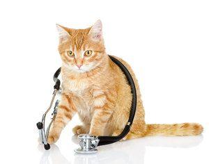 Îngrijirea pisicii