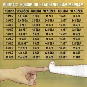 Tabel comparativ între vârstele de pisici și oameni