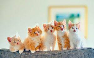 Pisici de creștere
