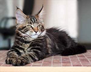 La o pisică de un an