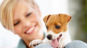 Vârsta câinelui după standardele umane