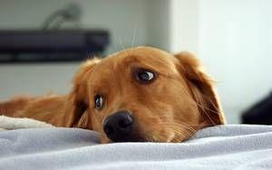 De ce trebuie să cunoști vârsta câinelui