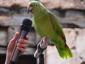 Abilitatea de a preda un papagal