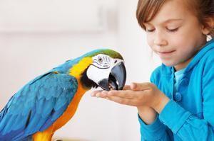 Tratamentul afectiv al papagalilor