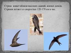 Totul despre păsări se schimbă: cum arată, unde locuiesc și la ce se hrănesc