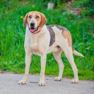 Alegerea unui pseudonim pentru un câine