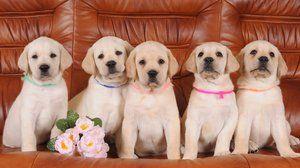 Porecle frumoase pentru câini
